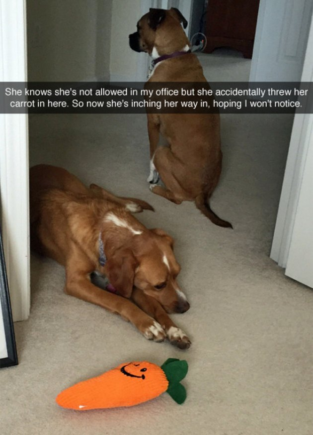 Dog trying to get its toy back