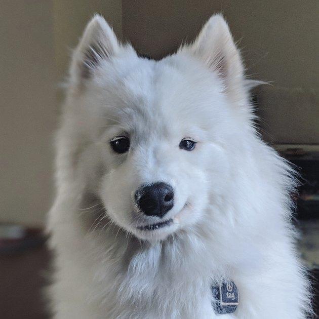 Dog smirking