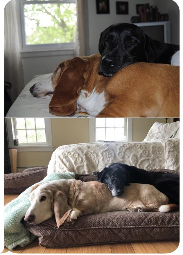 Dogs snuggling when they're young, and snuggling in the same position when they're old