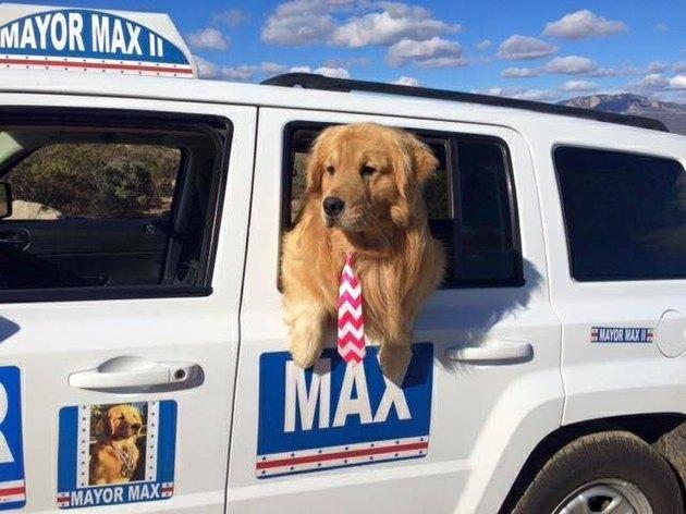 Dog Mayor Max in his MayorMobile
