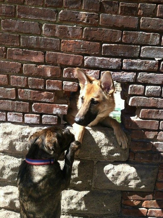 Two dogs sniffing each other through a hole in a brick wall