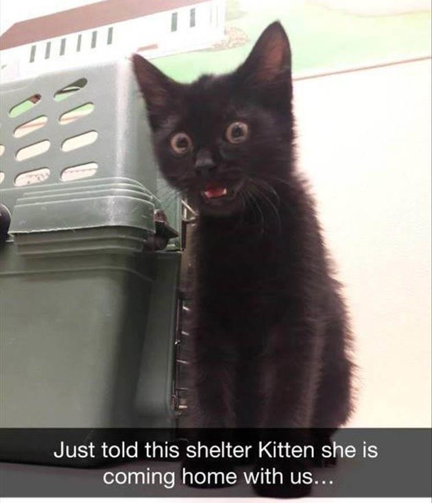 Kitten looking very surprised and happy that she is being adopted