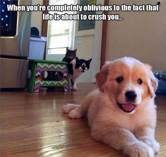 Puppy about to get pounced by two old cats