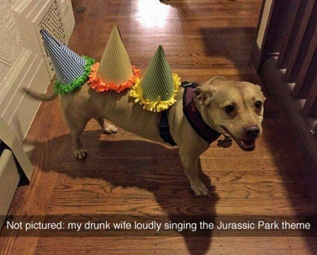 Dog wearing birthday hats like he's a dinosaur