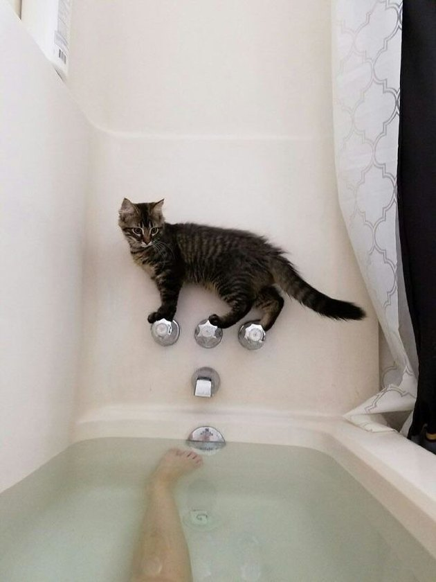 Cat stuck on bathtub faucet and the tub is full of water!