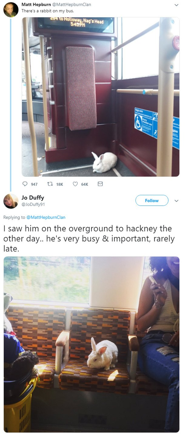 Rabbit on a bus