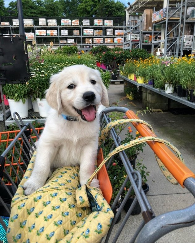 Cute puppy at Home Depot