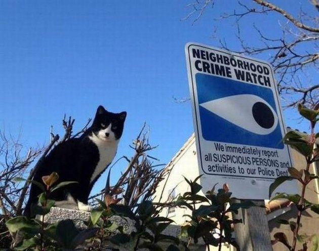 Cat sitting next to Neighborhood Crime Watch sign