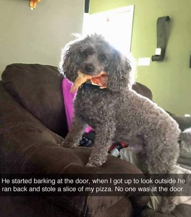Dogs Who Aren't Here to Meet Your Expectations