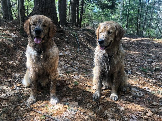 17 absolutely filthy golden retrievers and labradors