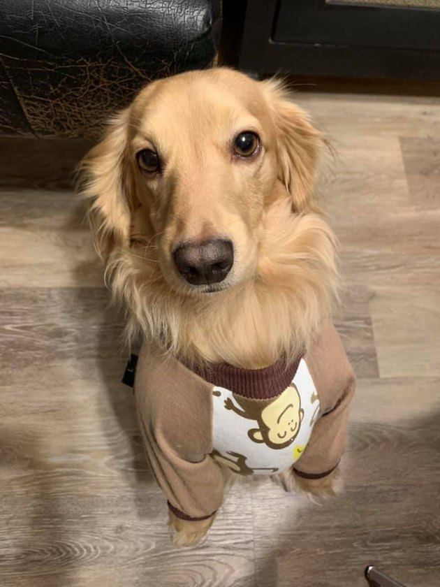 22 *More* Dogs In Pajamas Who Are Crushing Coziness Goals