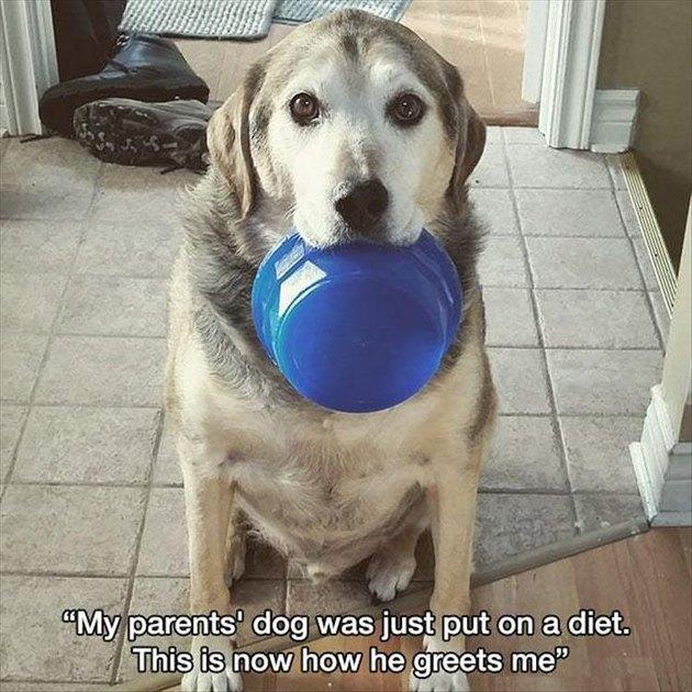 Hungry dog holding food bowl