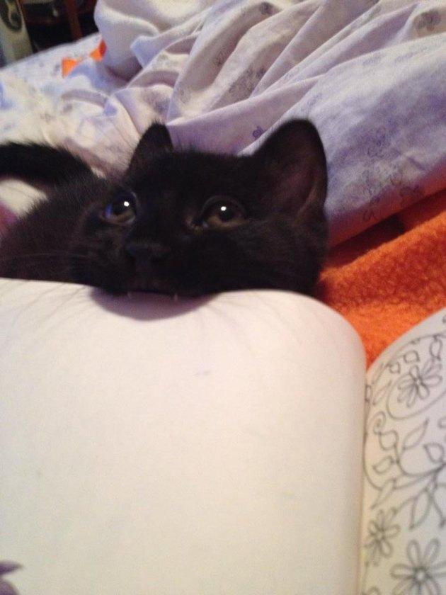 Kitten biting book