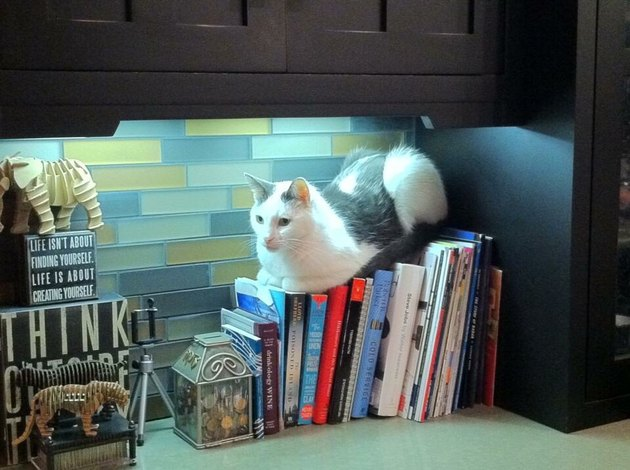 Cat laying on books
