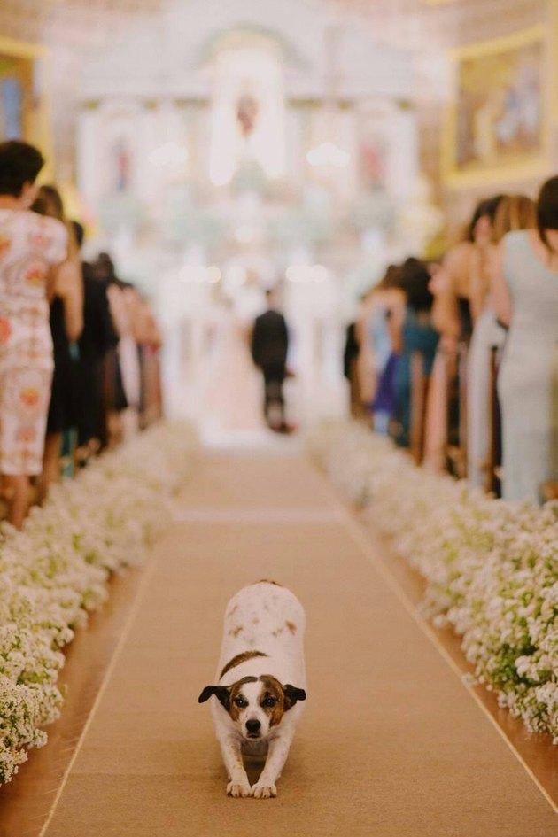dog does a stretch at wedding