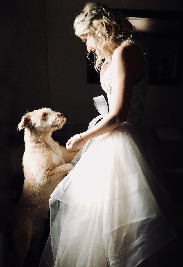 dog locks eyes with bride at wedding