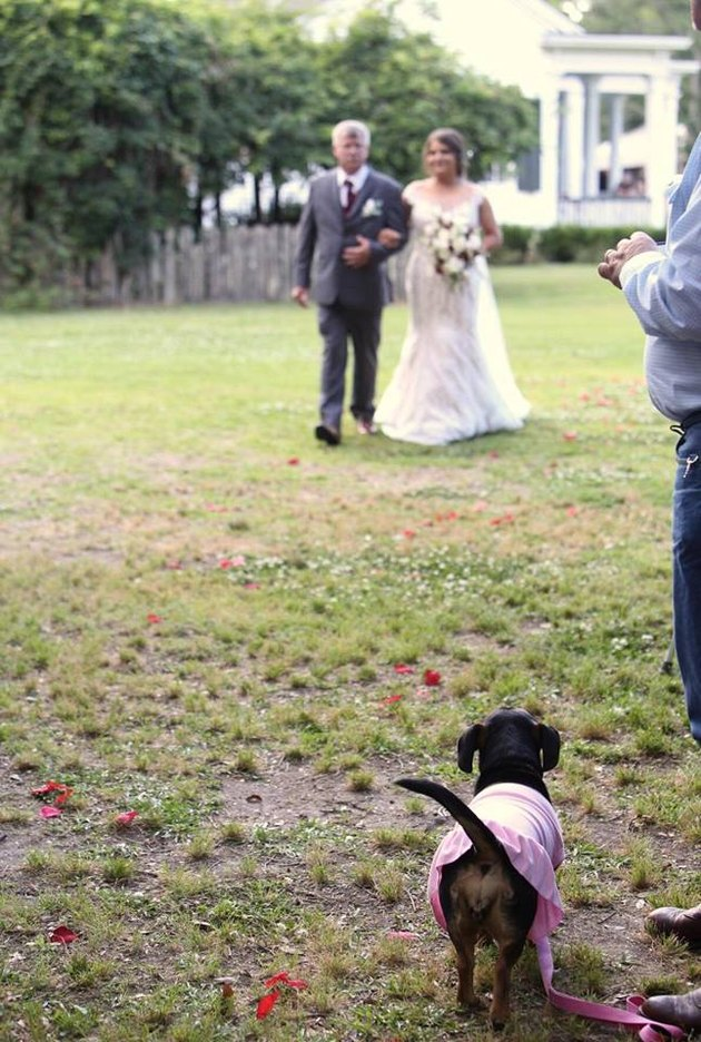 wedding dog watches as father walks bride down aisle
