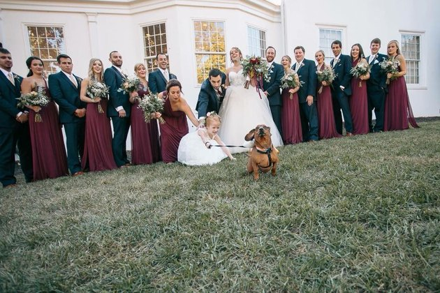 small dog on leash pulls flower girl at wedding