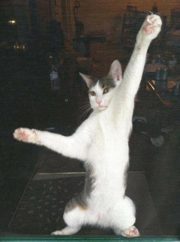 cat stuck on screen door