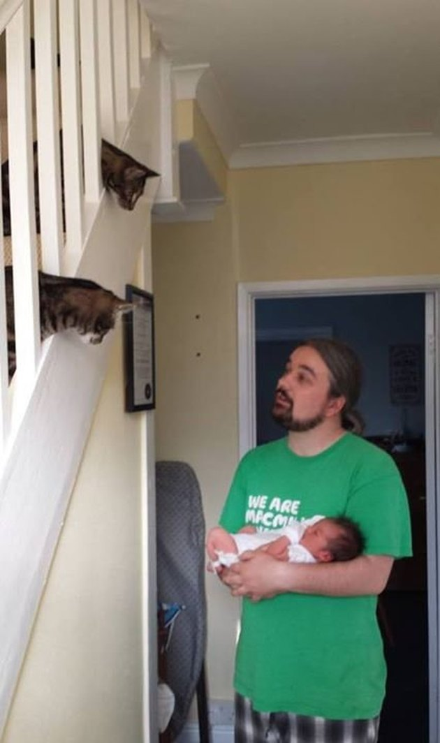 Two cats on a staircase looking down at a man holding a baby