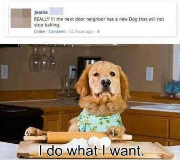 Hed: 21 Dogs Who Aren't Here to Meet Your Expectations