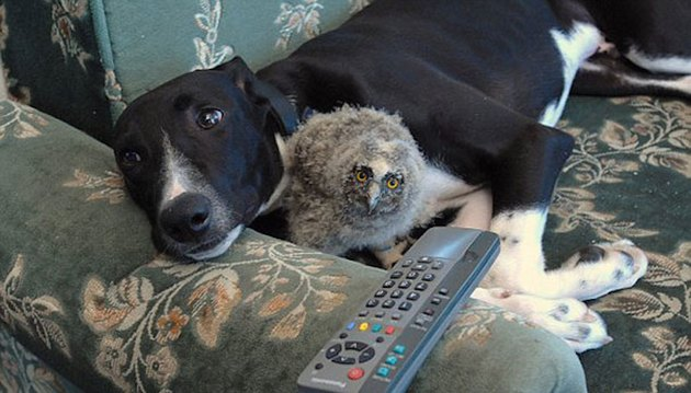 Dog and owlet cuddling