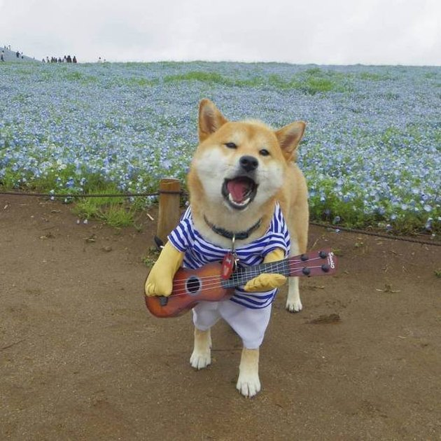 Dog in a costume looking like he's singing a song!