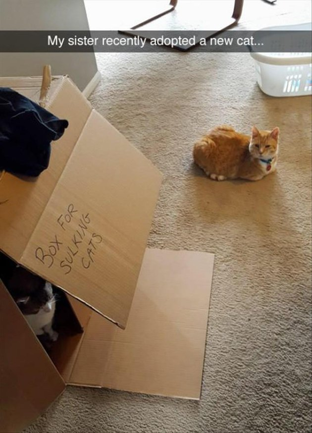 "Cat sitting in a box that is labeled ""box for sulking cats"" and there is a new cat"
