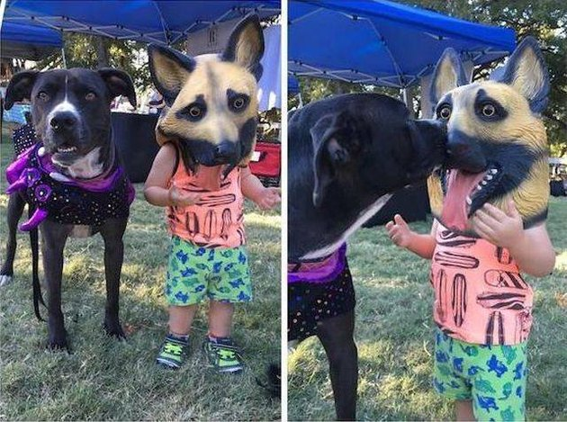 Little kid in a dog mask and his dog friend licks him