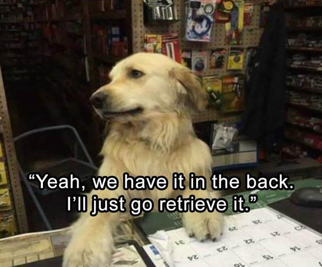 Dog shopkeeper telling a very bad pun