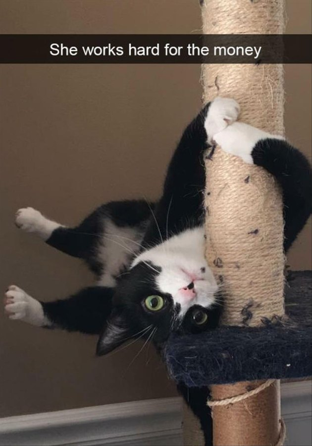 Cat playing on a scratching pole