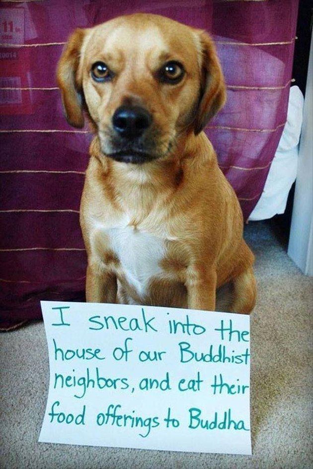 Dog who sneaks his neighbor's food offerings to Buddha