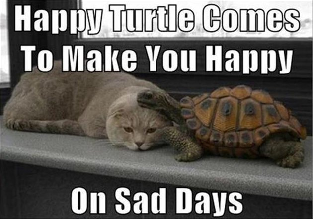 Nice turtle and a sad cat