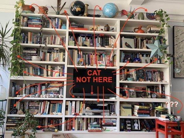 cat hides on bookshelf