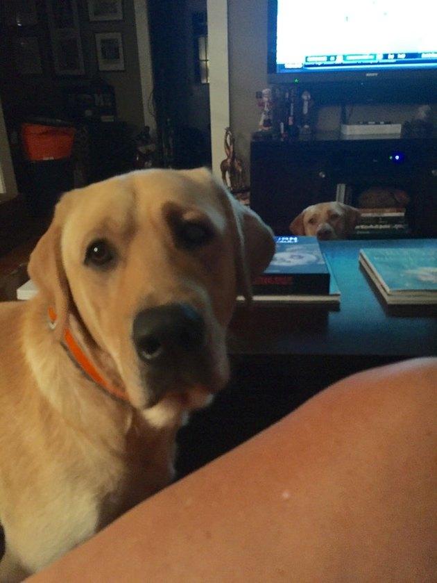 Dog photobombing picture of dog.