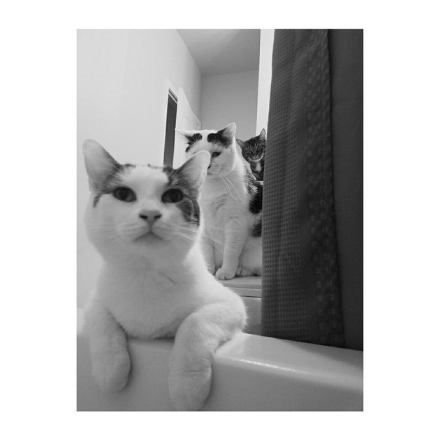 Two cats photobombing picture of cat taken from bathtub.