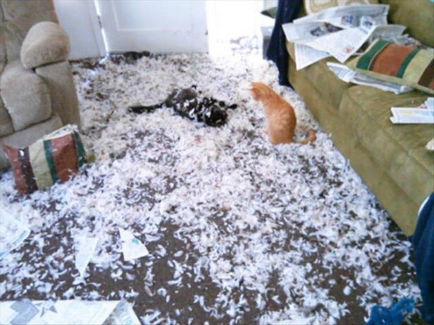 Two cats and a HUGE mess