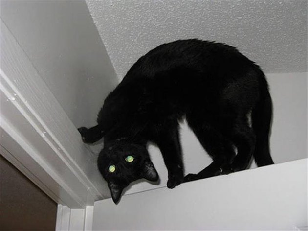 Black cat on top of a door and his head is backwards?!