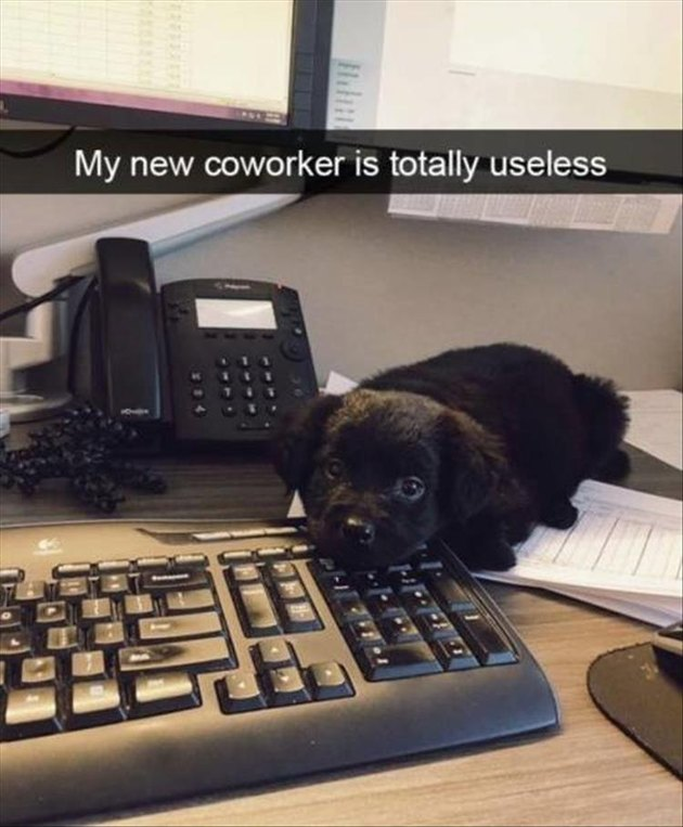 Puppy at work