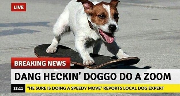 Dog on a skateboard.