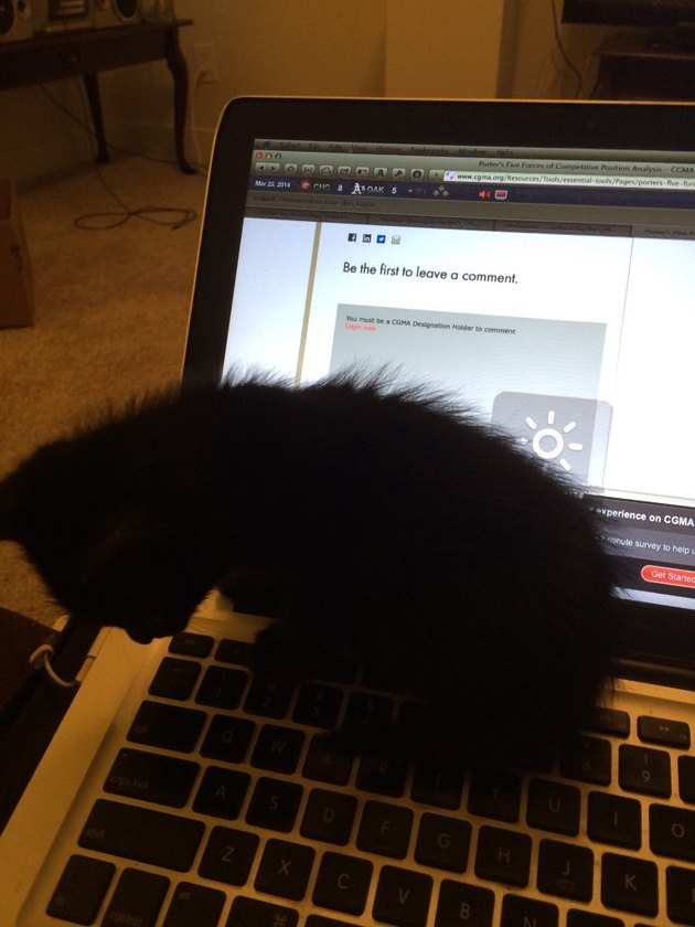 black cat sits on laptop