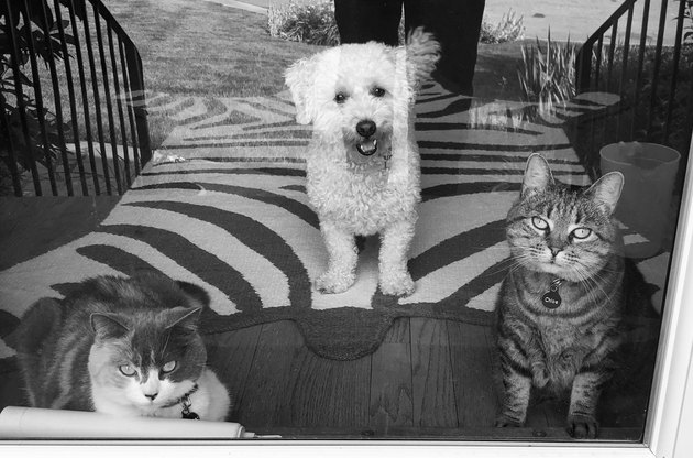 cats and dog pose for picture