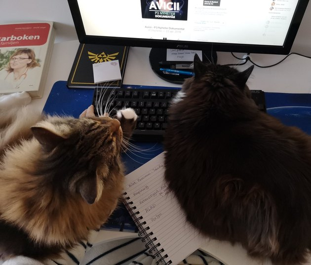 cats sleep on keyboard