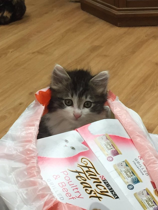 kitten in trash bag