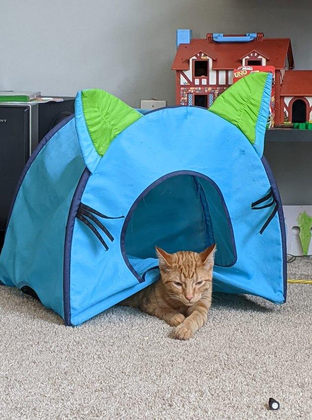 cat sleeps *under* cat bed
