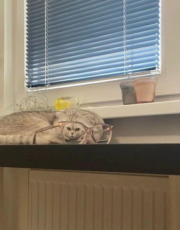 sleeping cat stares through eyeglasses
