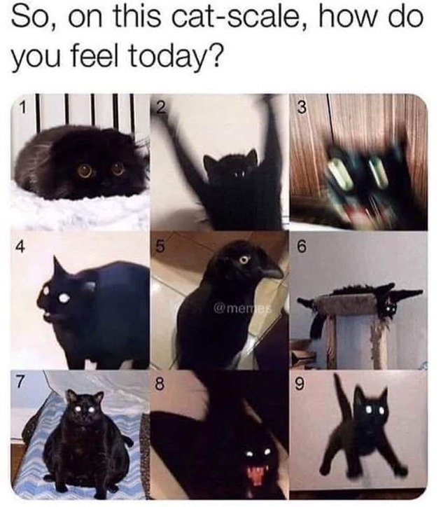 which black cat are you meme