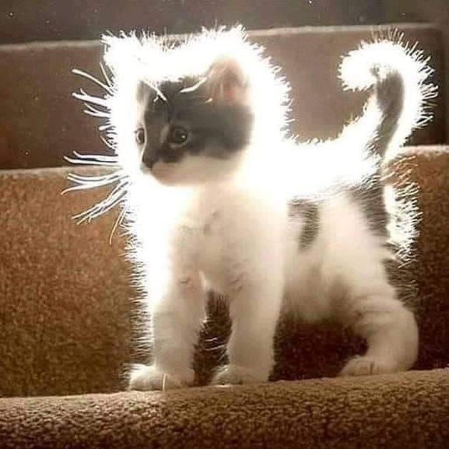 kitten with powerful aura