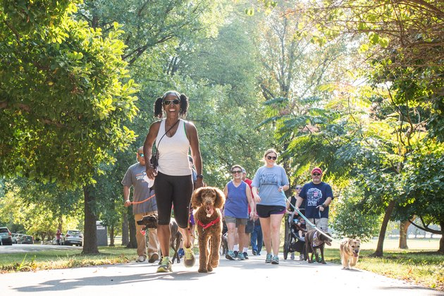 Find out where Strut Your mutt will happen.