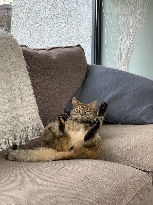 Cat sitting weird